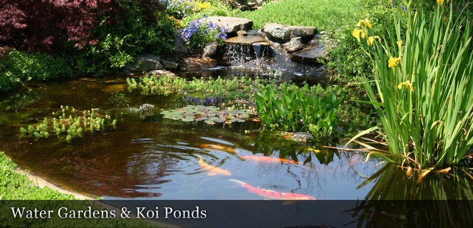 Water Gardens and Koi Ponds